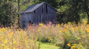Storywalk! Wednesdays in October at the Conservancy Homestead featured image