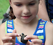 Have You Ever High-Fived a Turtle? Hands-On at the Wildlife Festival featured image