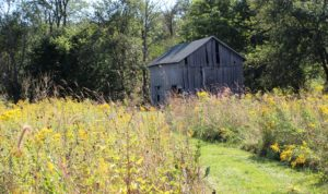 Storywalk! Wednesdays in October at the Conservancy Homestead |