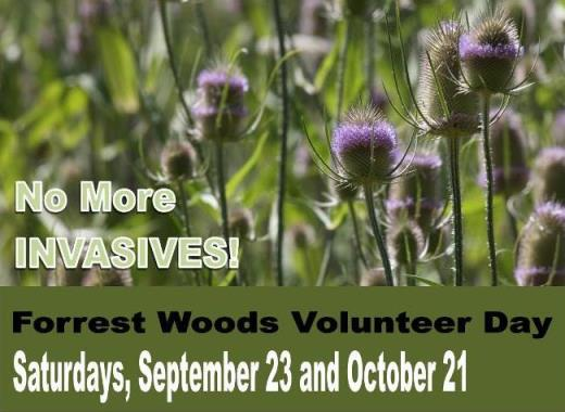 Forrest woods volunteer days