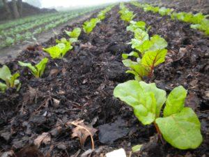 Food & Farm Initiative is Seeking Partners