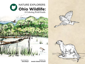 Black Swamp Conservancy Introduces Ohio Wildlife Guide featured image
