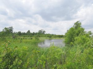 Visit Little Auglaize Wildlife Reserve June 8
