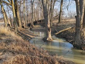 Forrest Riverland Restoration to Begin