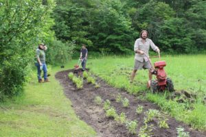 Planting begins at the Homestead