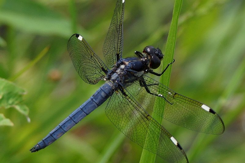 Counting Dragonflies featured image