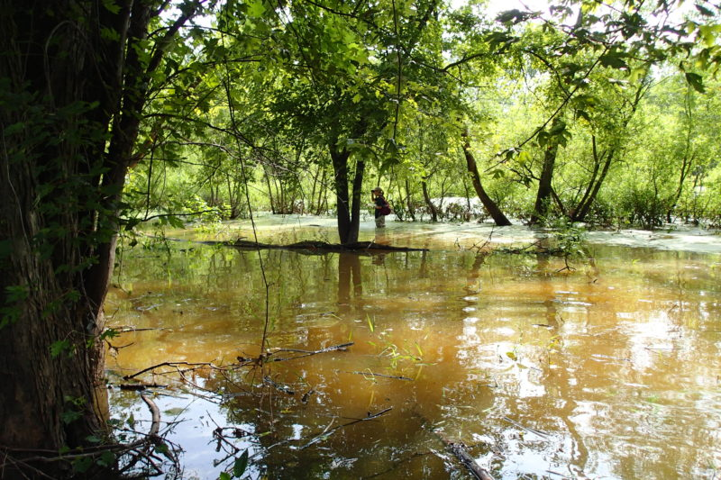 Request for Proposals St. Joseph River Wetland Restoration featured image
